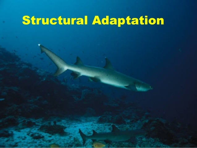 give an example of structural physiological and behavioral adaptations