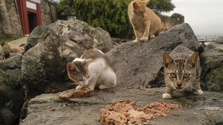 feral cats example school persuasive text