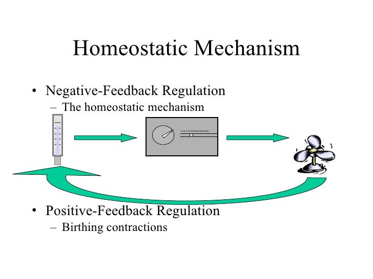 homeostatic regulation of body temperature is an example of