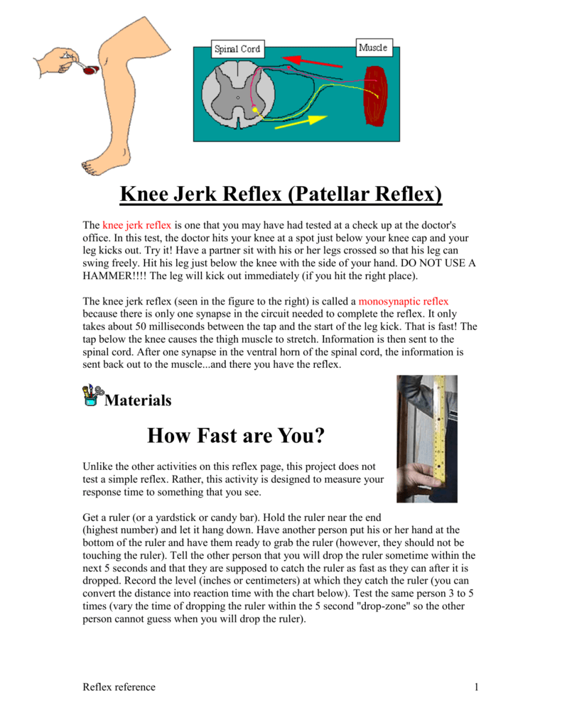 a knee-jerk reflex is an example of the
