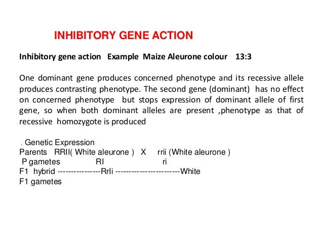 dominant gene definition and example
