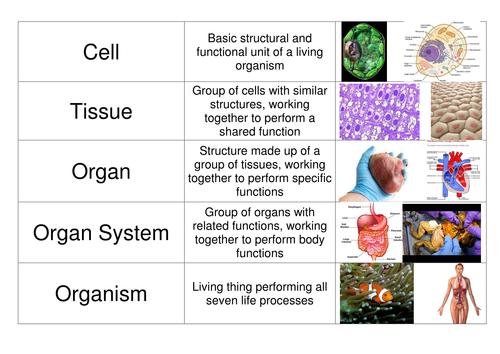 example of cell tissue organ organ system