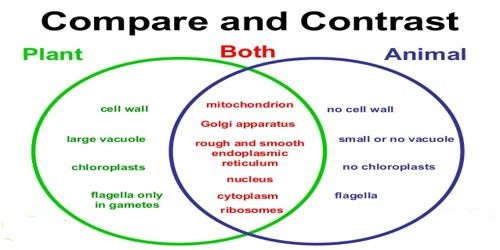 which is an example of comparing and contrasting