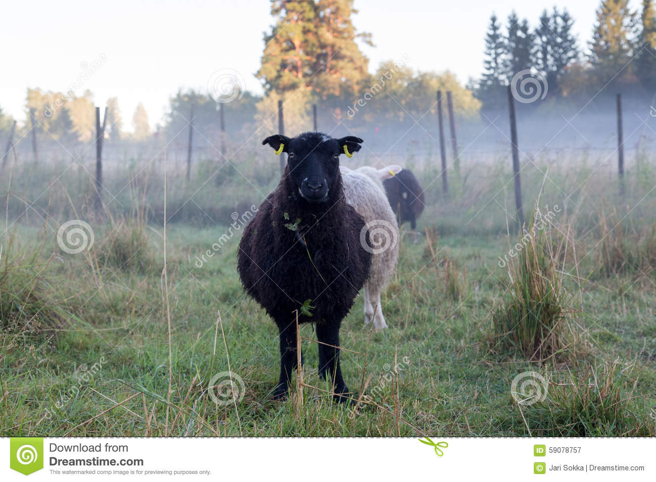 black sheep of the family example