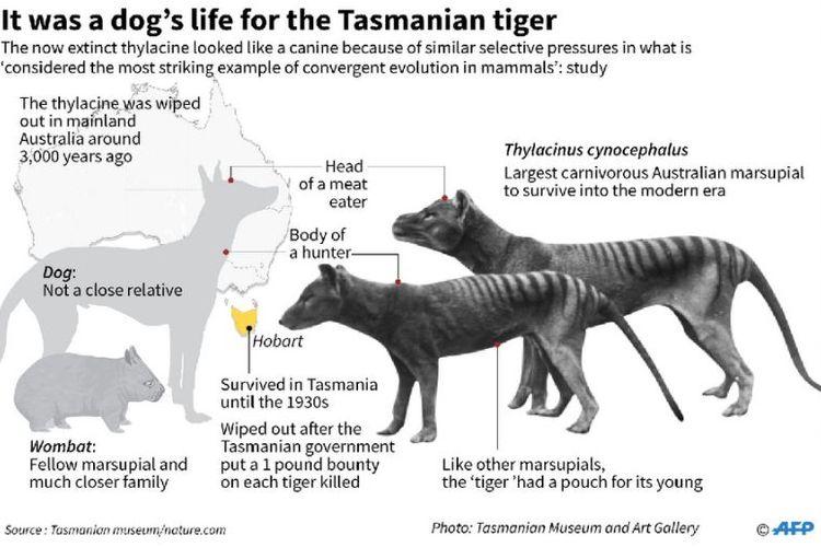 example if an asutralian marsupial