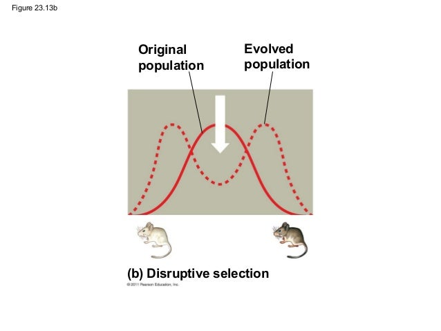 example of directional natural selection