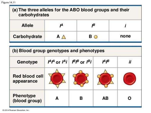 example of genotype in humans