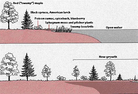 an example of ecological succession