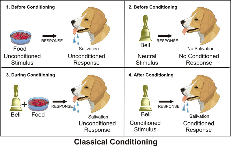 give an example of classical conditioning