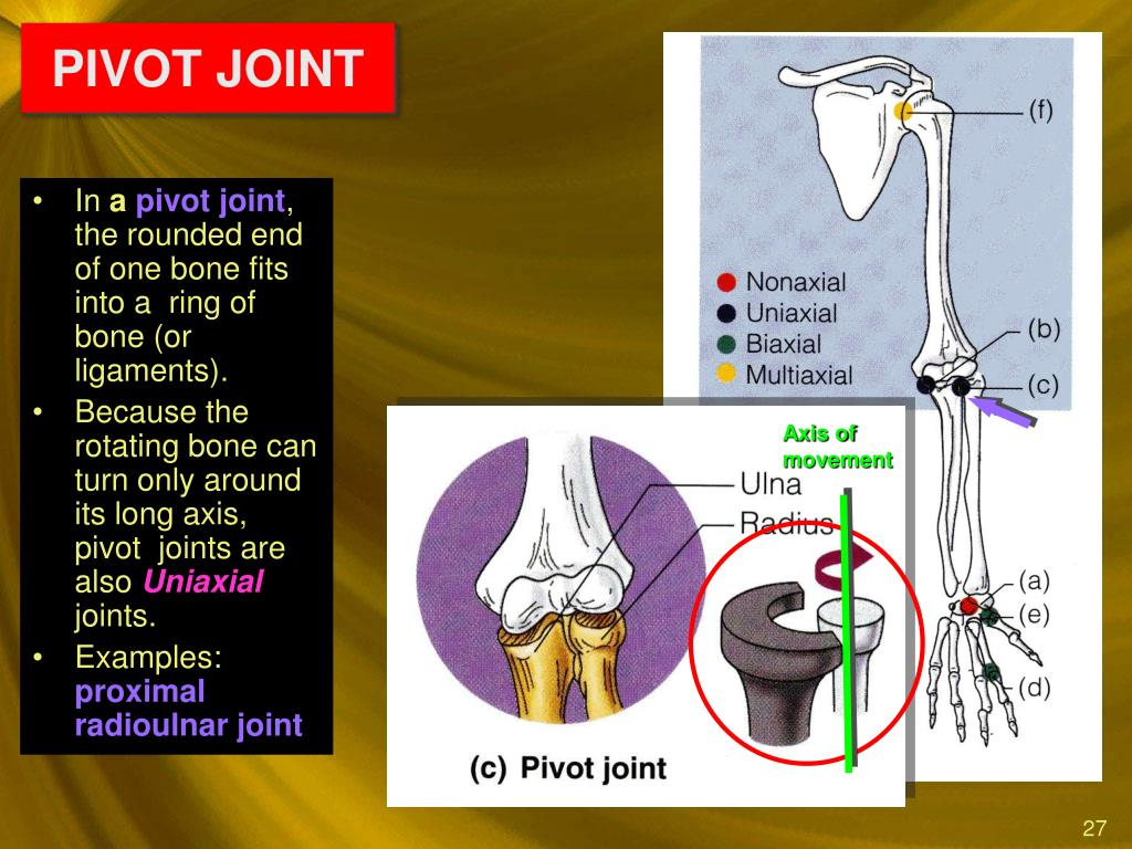 what is a pivot joint example